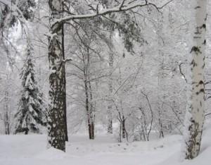 klimat_v rossii