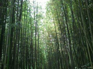 Тамьян бамбуковая роща