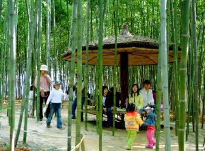 Дети в бамбуковой рощи